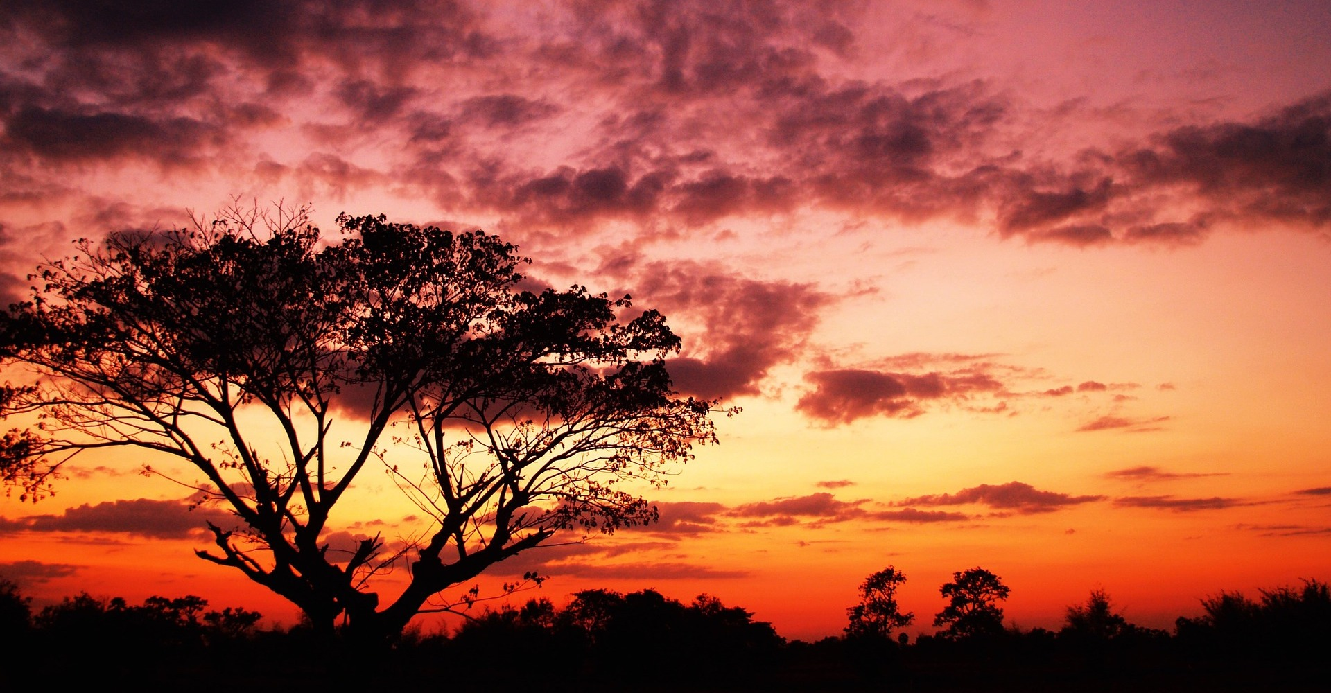 tree-dusk